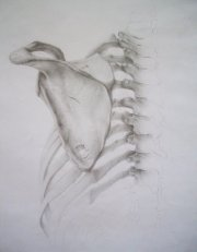 Lopatka (kresba tužkou)